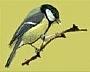 המרכז לטיפוח ציפורי הבר בחצר הבית