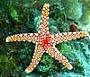 שמורת האלמוגים