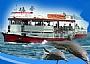 -ספינות הזכוכית ישראל ים - שיט עם ספינת זכוכית באילת, glass bottom boats